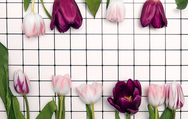 Spring floral background with copy space. flat-lay frame made of tulips blossom flowers with water drops, top view, wide composition