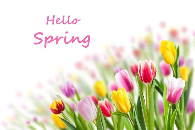 チューリップの花とこんにちは春のレタリングと春の花の背景