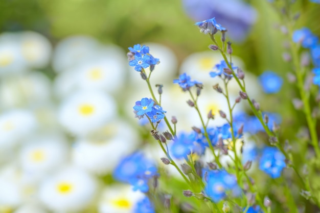 Spring flower background with daisies