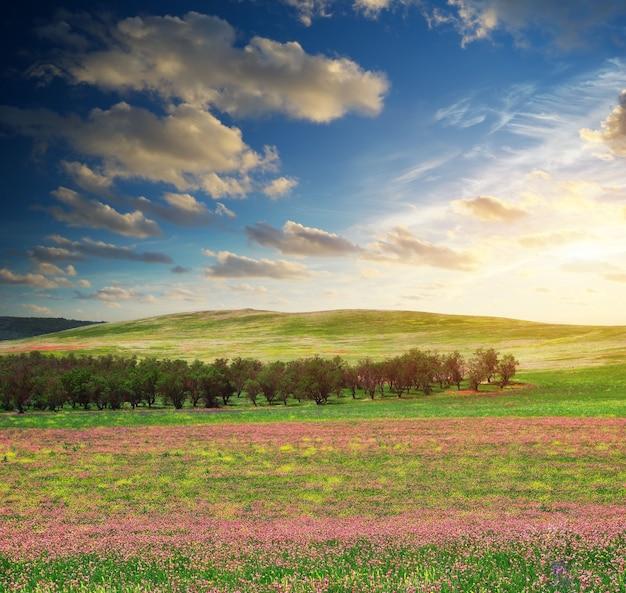 봄 꽃 초원입니다. 자연의 구성.