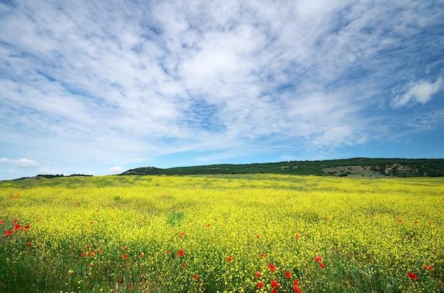 봄 꽃 초원