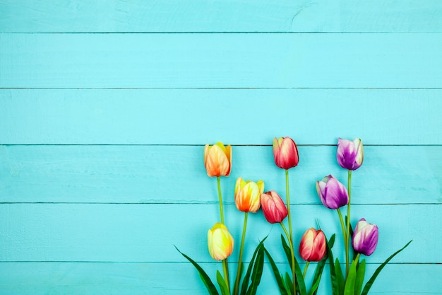 Spring flower of multi color tulips on wood