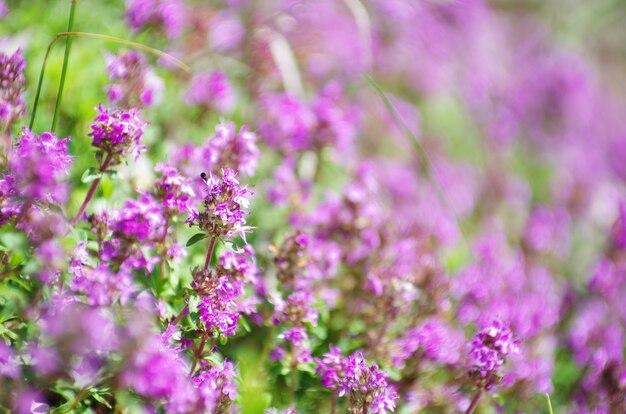 필드에 봄 꽃