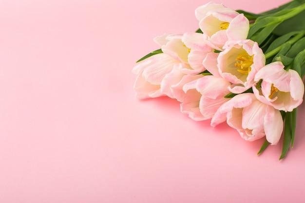 Весенний цветок розовые тюльпаны на розовом