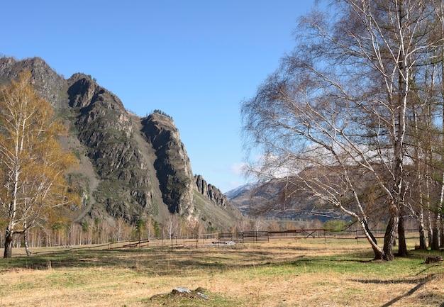 Весенние цветущие березы на огороженном лугу высокие крутые скалы в утреннем свете