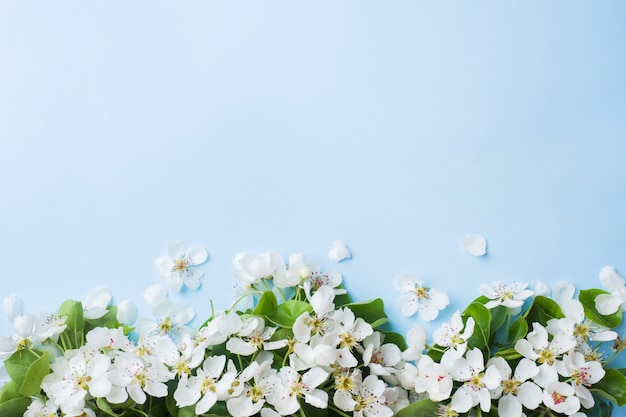Spring flowering branch on blue background