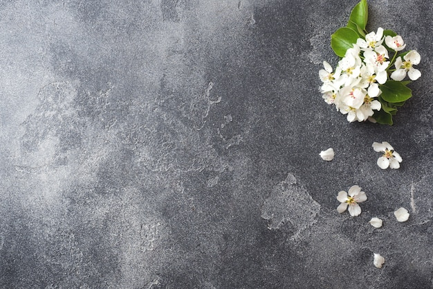 Spring flowering branch on grey concrete background
