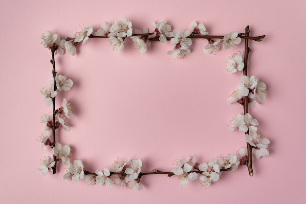 Весенние цветущие ветви на розовом фоне в рамке. шаблон. фон. макет.