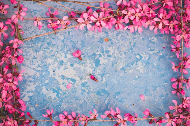 Весенние цветущие ветви, розовые цветы на голубом