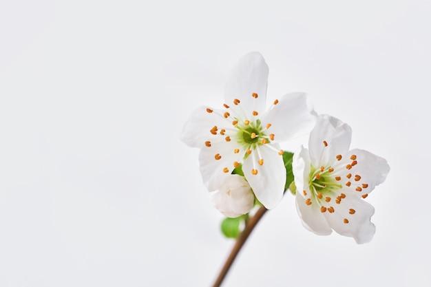 봄 꽃 가지