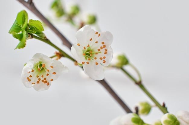 Весенние цветущие ветки
