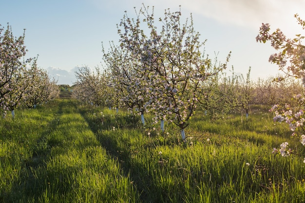 Spring flowering field in sunlight