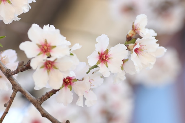 나무에 꽃의 봄 꽃이 만발한 흰 꽃 말벌과 꿀벌