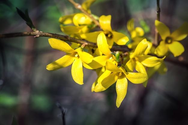 Весеннее цветение в солнечный день.