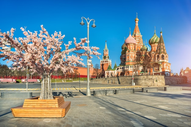 Spring flowering tree near red square in moscow and st. basil's cathedral