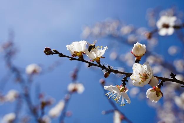 青い空を背景に庭に白い花と春の開花木。