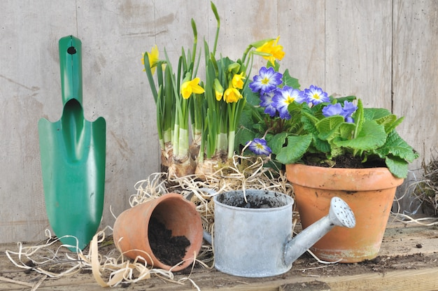 Spring flowerpots and gardening tools