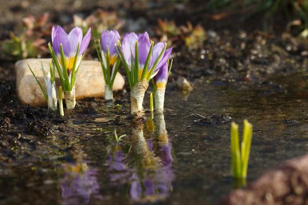 雪解け後の春の花
