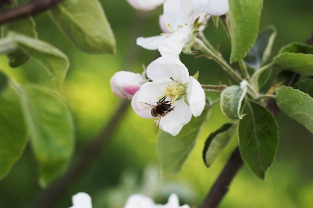 春の花とミツバチ