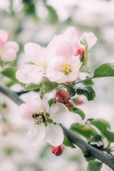 봄 꽃 배너 봄 갱신 자연 봄 꽃 피는 신생활 핑크 꽃 사쿠라