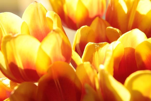 Весенние цветы красивый букет желтых тюльпанов весенний разноцветный букет разноцветных тюльпанов