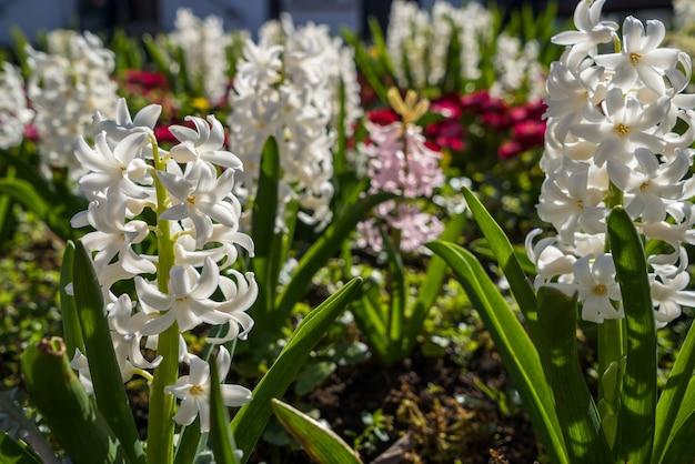 East grinstead의 화단에 피는 봄 꽃