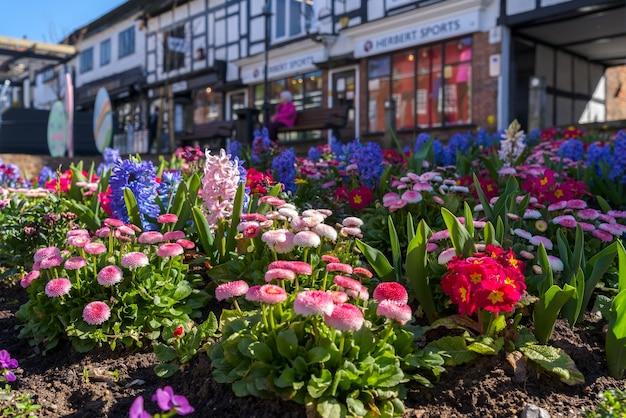 West sussex, east grinstead에 피는 봄 꽃