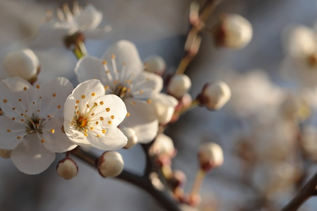 夜明けに木に咲く春の花