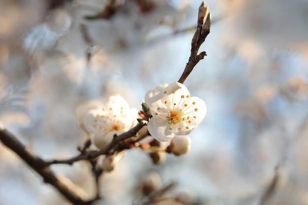 夕暮れ時の木に咲く春の花