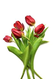 봄 꽃입니다. 흰색 배경에 고립 된 오른쪽 모서리에 빨간 튤립 꽃다발. 상위 뷰, 프레임, 테두리, 복사 공간. 인사말 카드. 어머니의 날, 발렌타인 데이, 3월 8일, 여성의 날.