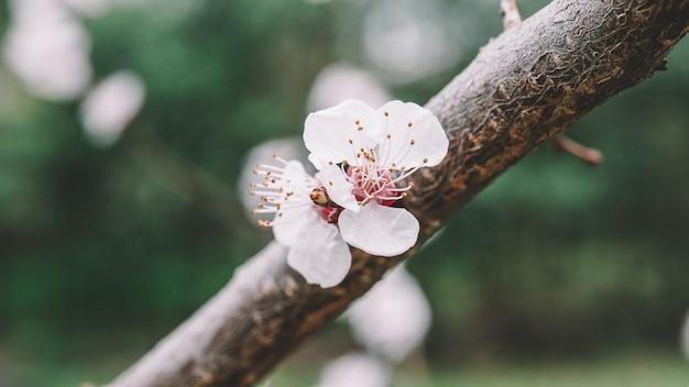 春の花のクローズアップ春の色を表示