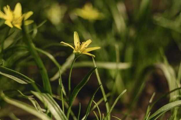 春の花のクローズアップビュー