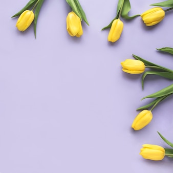 Spring flowers. frame made of yellow tulip flowers on purple background. flat lay, top view. minimal floral mock up concept. add your text.