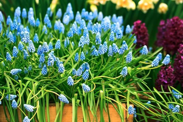 상자에 봄 꽃