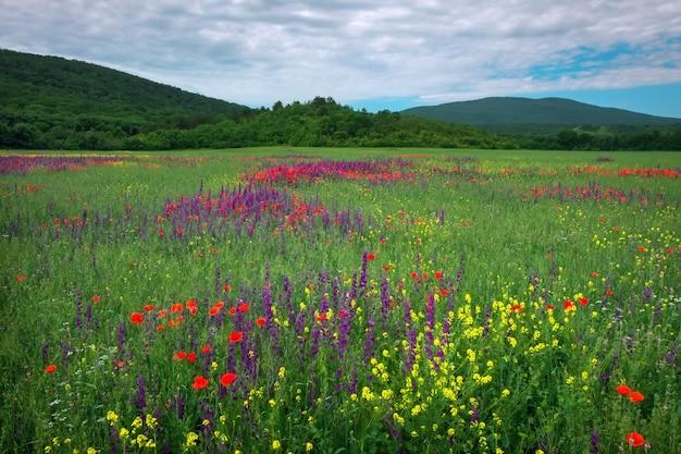 필드에 봄 꽃입니다. 아름다운 풍경. 자연의 구성