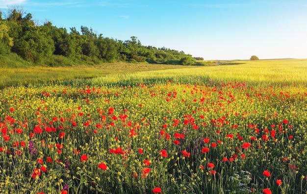 필드에 봄 꽃입니다. 아름다운 풍경.