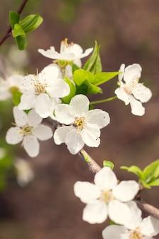 果樹園の春の花