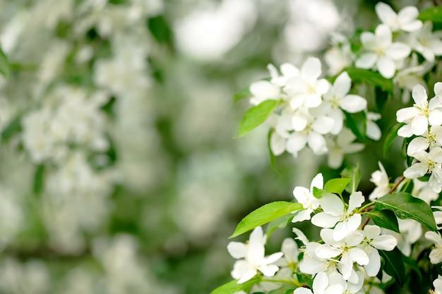 정원 클로즈업에서 봄 꽃
