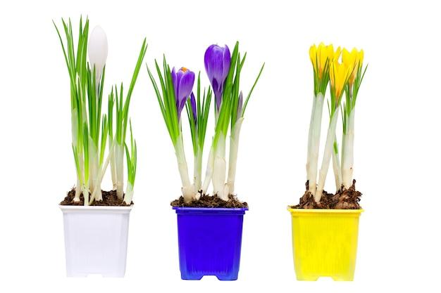 花瓶と鉢の春の花、白で隔離