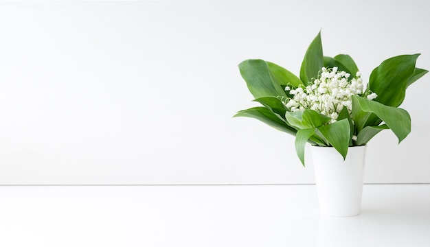 Весенние цветы ландыша и зеленые листья в белой вазе. копировать пространство.