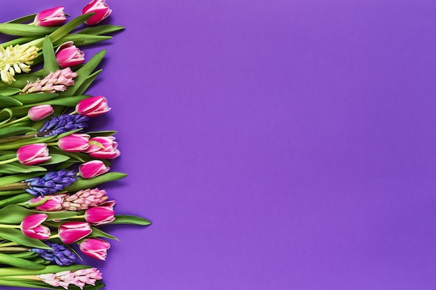 Весенние цветы на фиолетовом фоне. вид сверху, копия пространства.