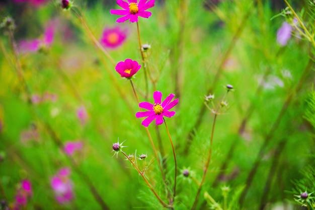 緑の背景に春の花