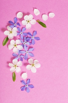 Spring  flowers on pink surface