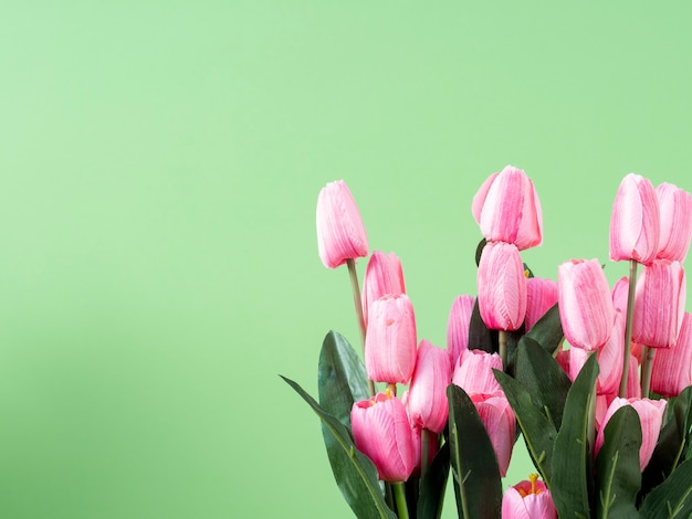 Spring flowers. pink tulip on green background