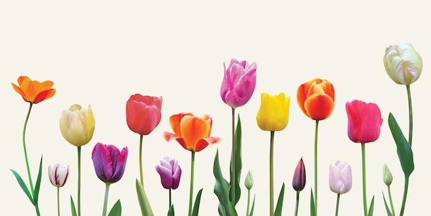 밝은 배경 부활절 또는 발렌타인 데이 배너 디자인에 봄 꽃 튤립 배열