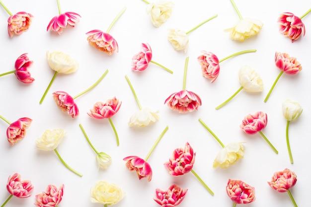パステルカラーの春の花チューリップ