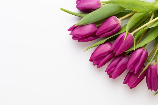 Весенние цветы. тюльпаны на белом фоне. открытка, день матери, пасхальная открытка.
