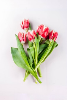 Spring . flowers tulips on white .  top view, greeting card