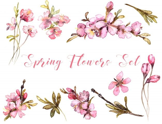 Spring flowers watercolor. tender blush