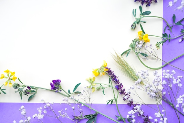 Spring flowers on white and purple backdrop